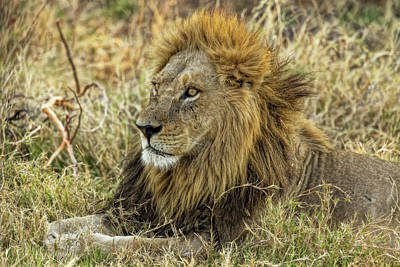 Photograph - The Mighty Lion Has Fallen by Kay Brewer