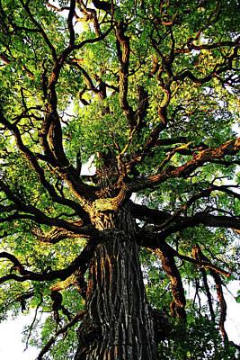 Photograph - The Mighty Oak by Debbie Oppermann