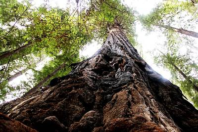 Photograph - The Mighty Redwood by Charlene Reinauer