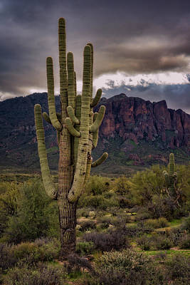 Photograph - The Mighty Saguaro  by Saija Lehtonen