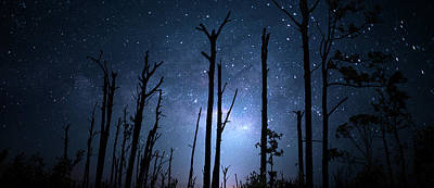 Beauty Mark Photograph - The Milky Way Forest by Mark Andrew Thomas