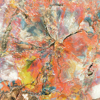 Petrified Wood Photograph - The Mineral Tree by Joseph Smith