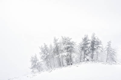 The Minimal Forest Art Print