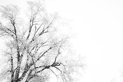Art Print featuring the photograph The Minimal Tree by Joel Witmeyer