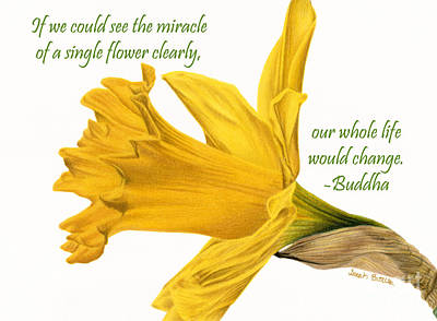 Daffodils Painting - The Miracle Of A Single Flower by Sarah Batalka