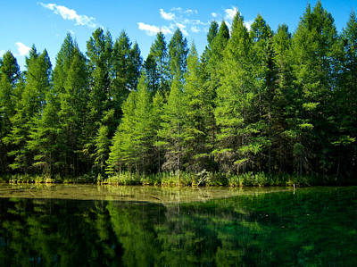 Photograph - Trees At The Mirror Of Heaven by Mary Lee Dereske