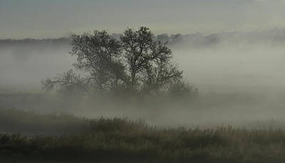Photograph - The Mist And A Tree by Rae Ann  M Garrett