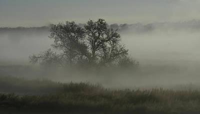 Photograph - The Mist And A Tree by Rae Ann  M Garrett
