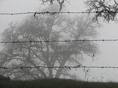 Photograph - The Mist -- Oak Tree Behind Barbed Wire On Mt. Hamilton, California by Darin Volpe