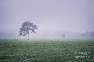 Photograph - The Mist Settles by Ray Warren