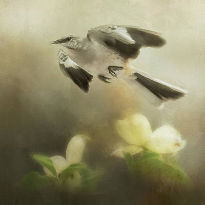 Photograph - The Mockingbirds Spring Flight by Jai Johnson