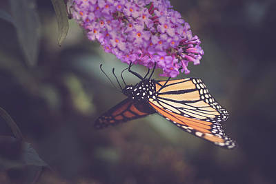 Photograph - The Monarch And The Butterfly Bush 1 by Joni Eskridge