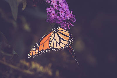 Photograph - The Monarch And The Butterfly Bush 2 by Joni Eskridge