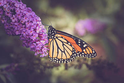 Photograph - The Monarch And The Butterfly Bush 3 by Joni Eskridge