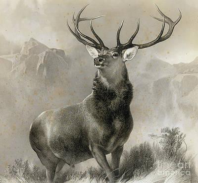 Landseer Wall Art - Drawing - The Monarch Of The Glen, 1852 by Edwin Landseer