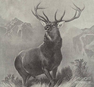 Deer Drawing - The Monarch Of The Glen by Edwin Landseer