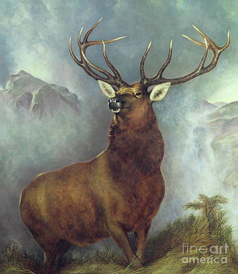 Monarch Painting - The Monarch Of The Glen by William Widgery