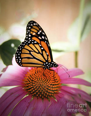 The Monarch Art Print by Robert Bales