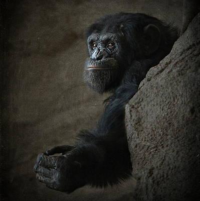 Orangutan Mixed Media - The Monkey by Heike Hultsch