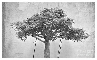 The Monochrome Bonsai Art Print by Gary Richards