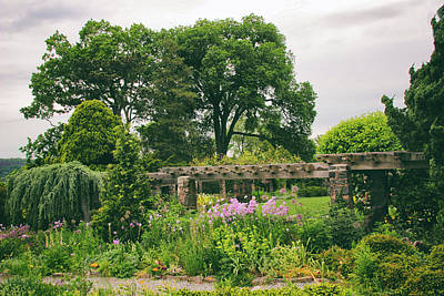 Photograph - The Monocot Garden by Jessica Jenney