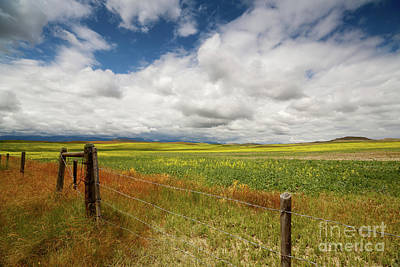 Photograph - The Montana Steppes by Beve Brown-Clark Photography