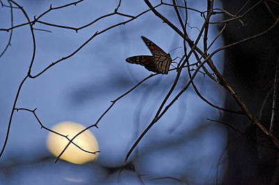 Jeka World Photograph - The Moon And The Monarch by Jeff Rose