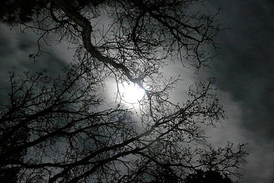 Winter Light Through The Trees Photograph - The Moon Prevails  by Angie Wingerd