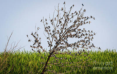 Photograph - The More The Merrier- Tree Swallows  by Ricky L Jones