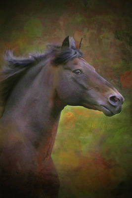 Digital Art - The Morgan Horse by Posey Clements