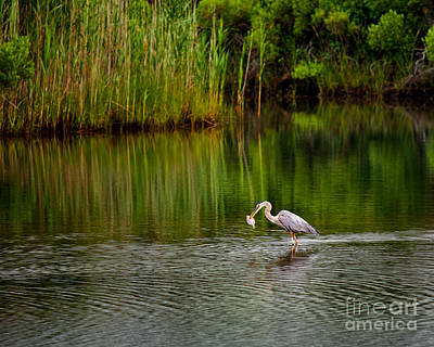 Wade Fishing Photograph - The Morning Catch by Mark Miller