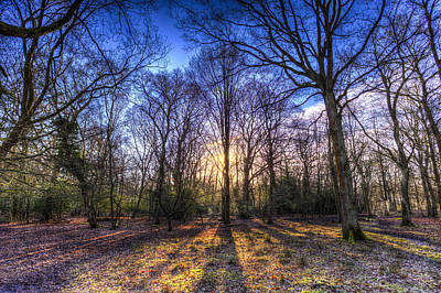 Photograph - The Morning Sun Forest by David Pyatt