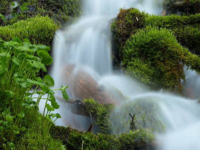 Photograph - The Mossy Mist by DeeLon Merritt