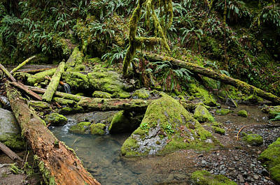 Photograph - The Mossy River by Margaret Pitcher