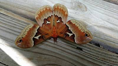 Photograph - The Moth by Nick Kirby