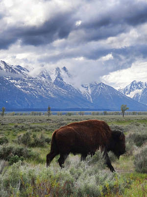 Bison Photograph - The Mountain And Me by Dan Sproul
