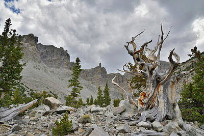 Photograph - The Muench Tree And Wheeler Peak by Ray Mathis