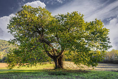 The Mulberry Tree Art Print