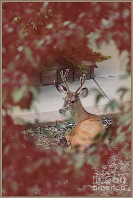 Photograph - The Mule Deer by Donna Munro