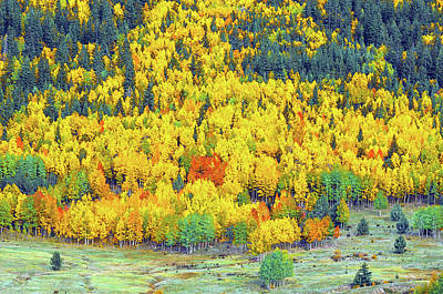 Photograph - The Multitudinous Array Of Colors In Our Nearby National Forest  by Bijan Pirnia