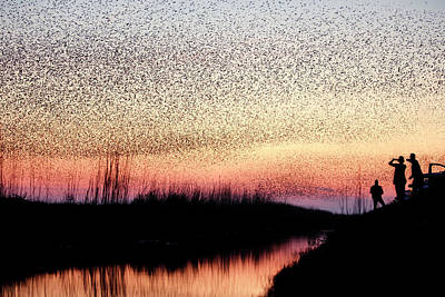 Starlings Wall Art - Photograph - The Murmuration Makers by Roeselien Raimond