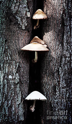 Photograph - the Mushroom Tree by Ella Kaye Dickey