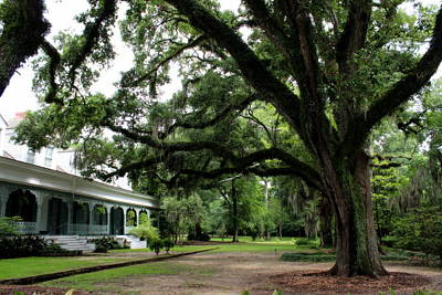 Photograph - The Myrtles Plantation by Beth Vincent