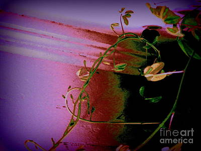 Photograph - The Mystery Vine by Nancy Kane Chapman