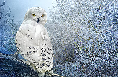 The Mystical Snowy Owl Art Print