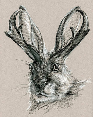 Drawing - The Mythical Jackalope by MM Anderson