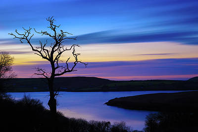 Art Print featuring the photograph The Naked Tree At Sunrise by Semmick Photo