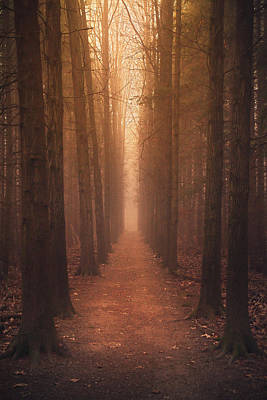 Photograph - The Narrow Path by Rob Blair