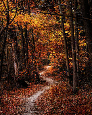 Maple Season Photograph - The Narrow Path by Scott Norris