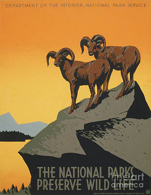 Painting - The National Parks Preserve Wild Life Vintage Travel Poster by R Muirhead Art